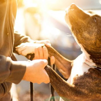 The Most Important Factor in Choosing a Dog (Hint: It's Not Breed)