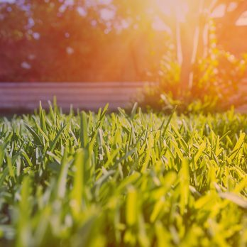 Here's How You Can Fix These 9 Pesky, Common Lawn Problems