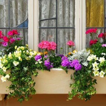 Planting Beautiful Window Boxes: 10 Simple Tips to Follow