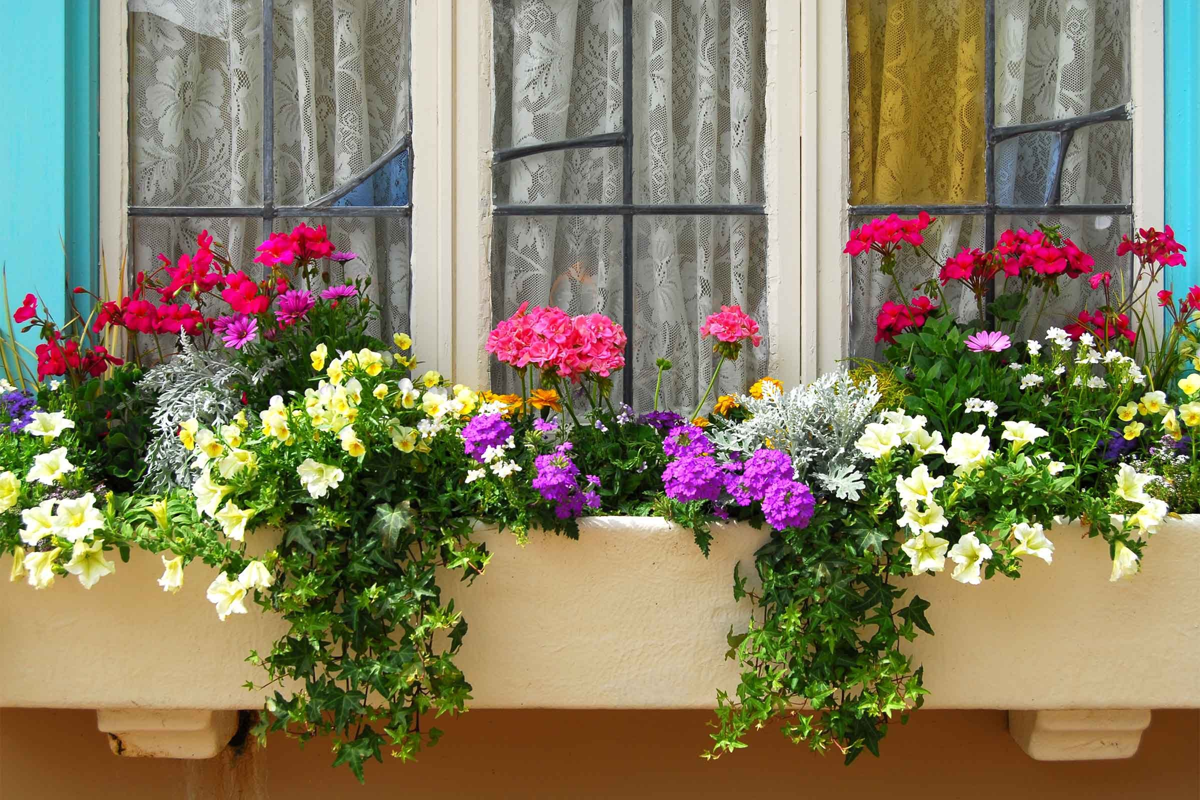 How To Plant Window Boxes 10 Simple Tips Reader S Digest