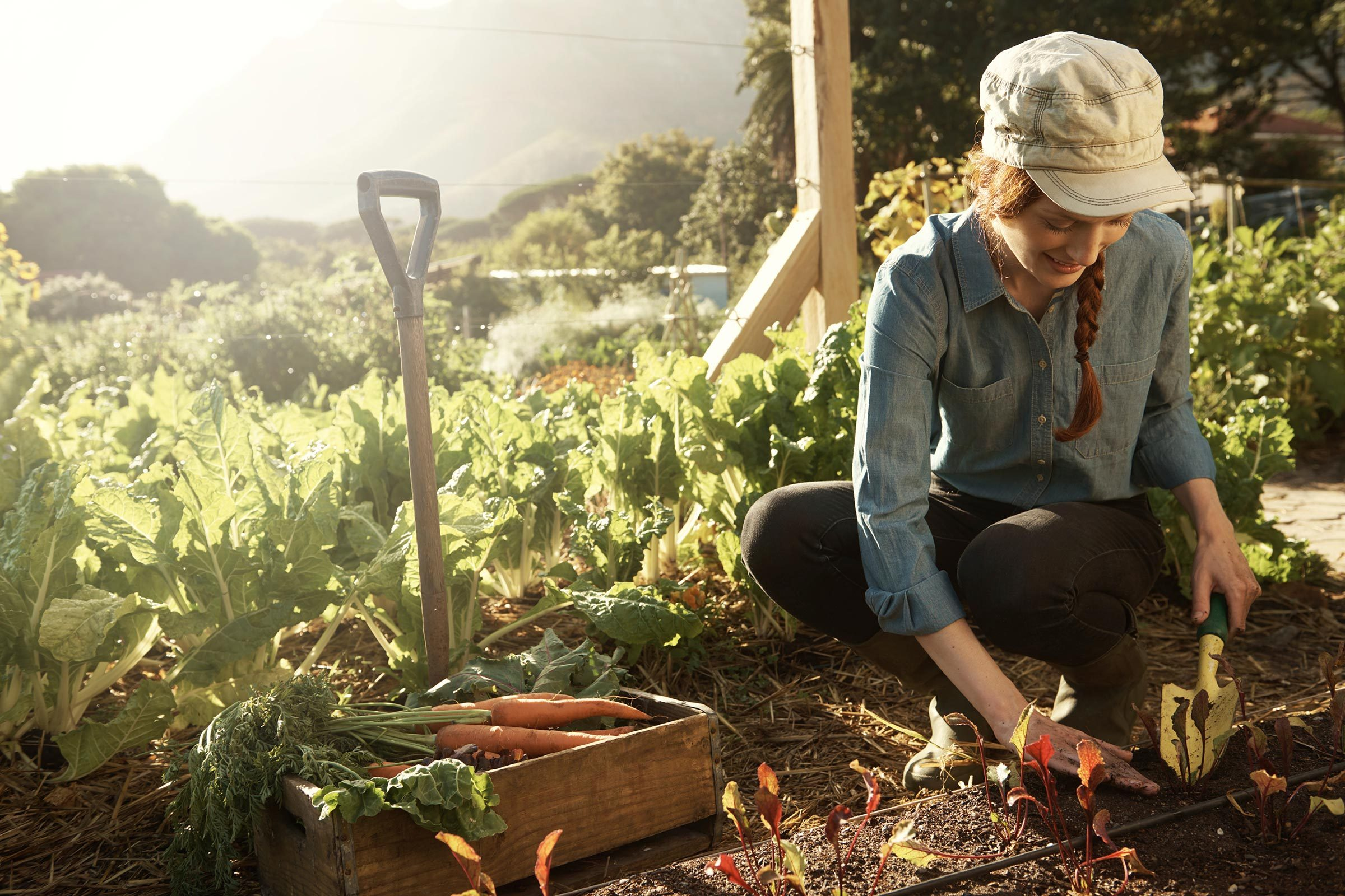 Is Organic Food Better For Your Health