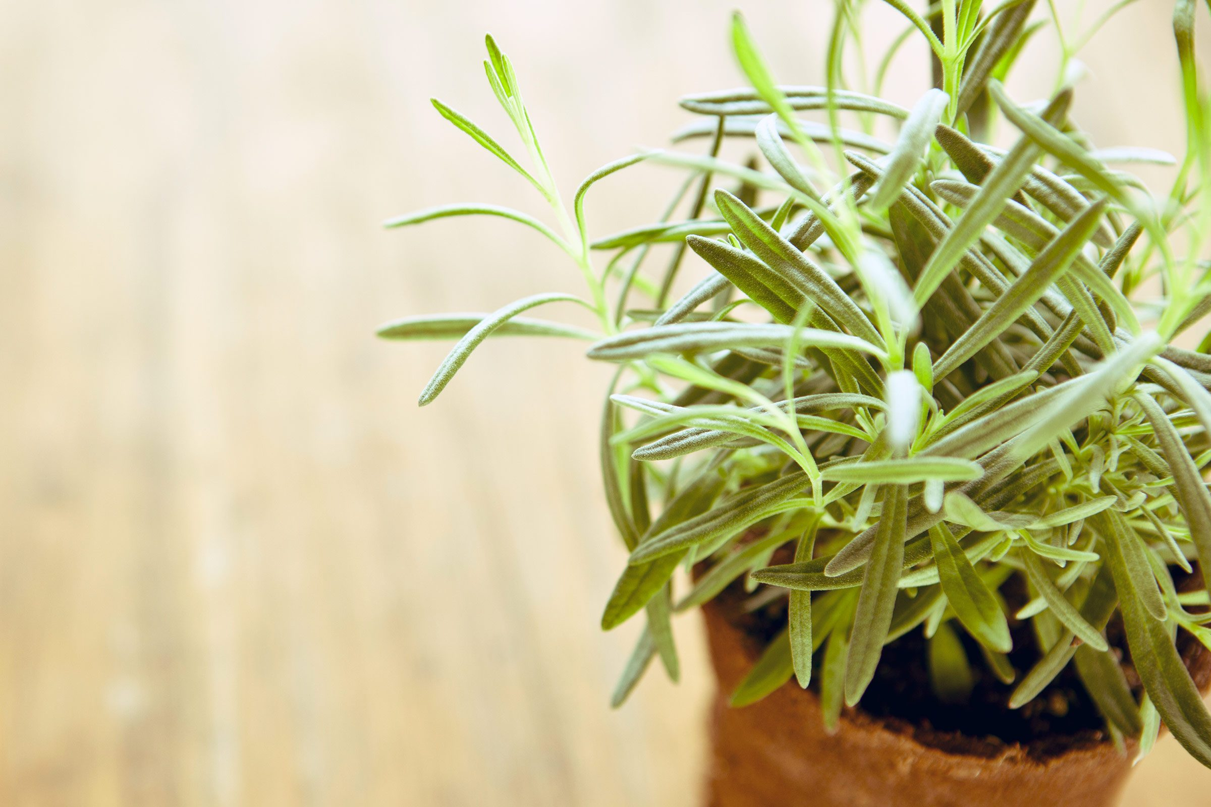 14 medicinal herbs you can grow readers digest