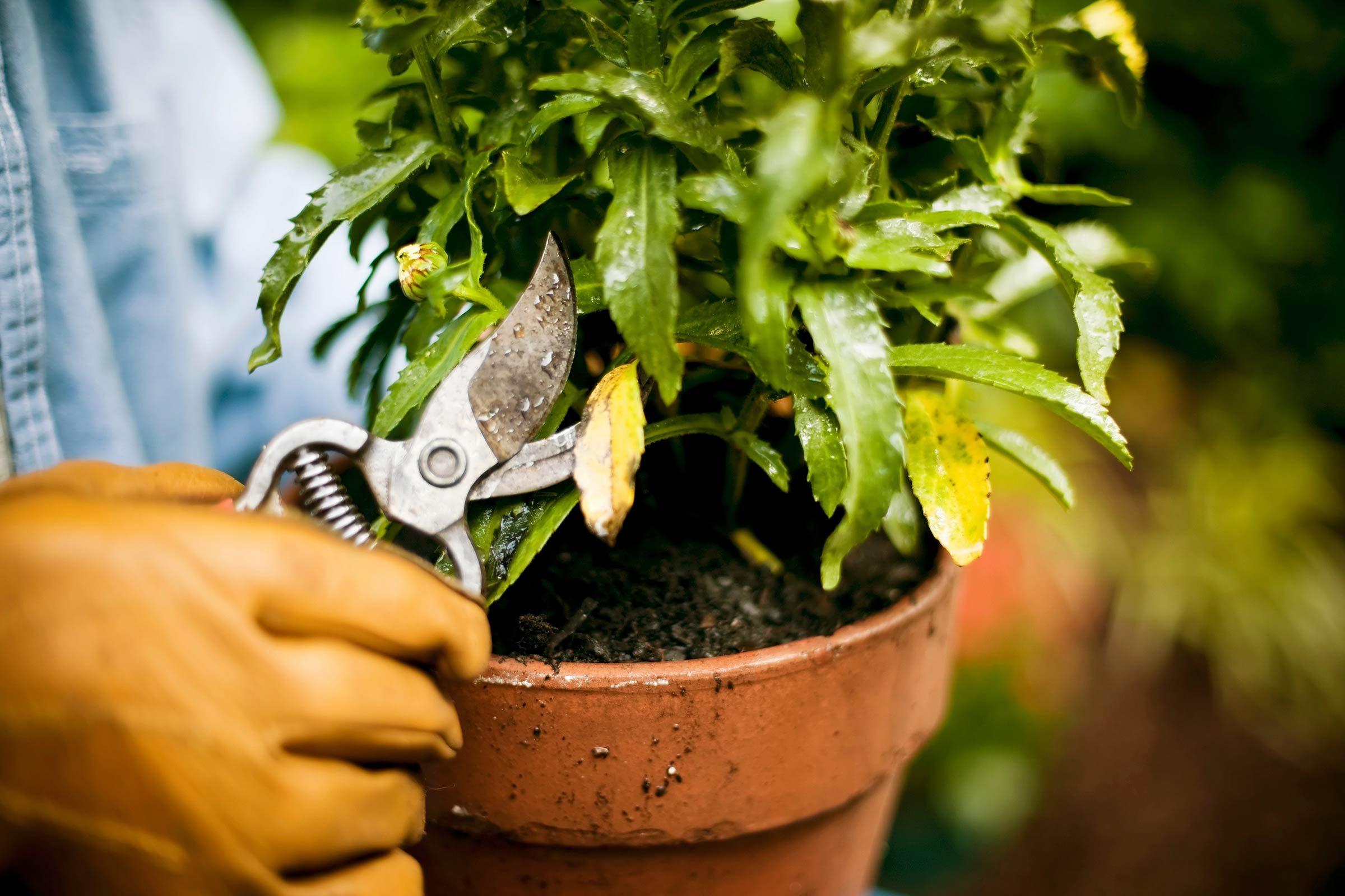 Growing Plants Indoors: 29 Tips for Houseplants | Reader's