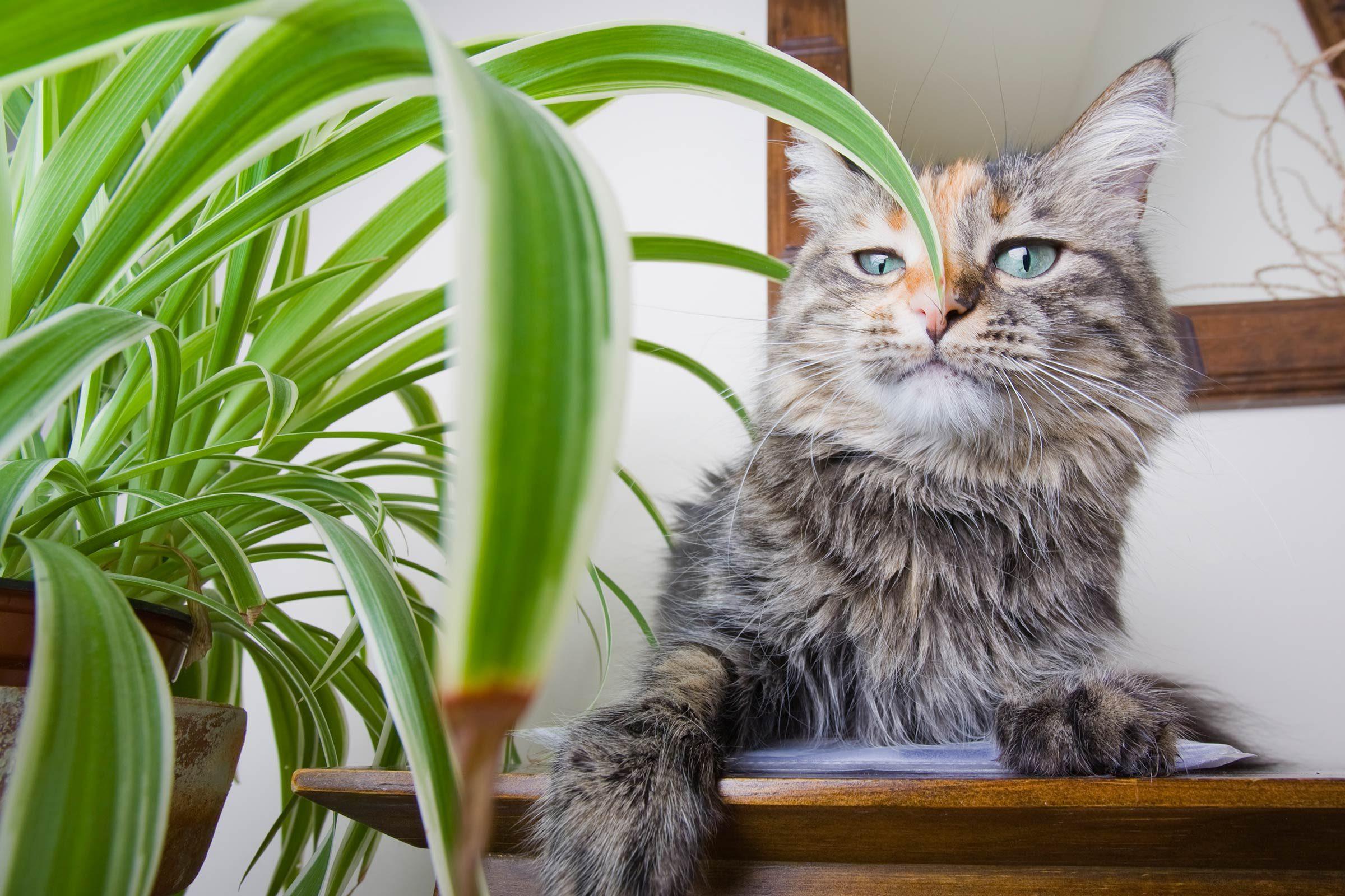 Опасные цветы для кошек фото