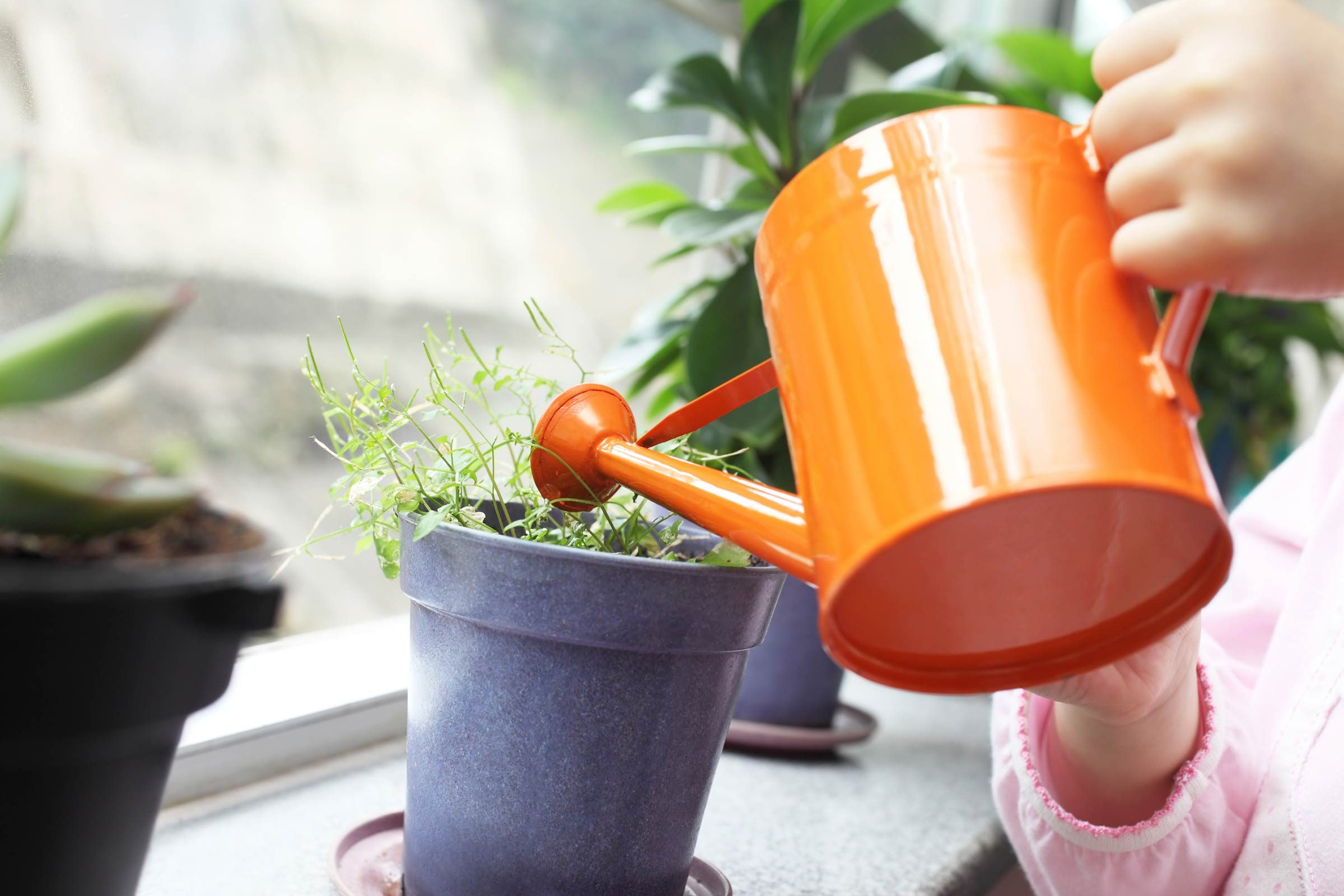 Growing Plants Indoors: 29 Tips for Houseplants | Reader's ... on plant tanks, plant water bags, plant protection bags, plant trees, hunting bags, plant seedlings, plant wall art, dog walking bags, plant pots bags, transplant trees woven bags, shopping bags, plant shrubs, plant growing bags, plant seeds bags, christmas tree removal bags, plant cutting bags, plant transport bags, plant propagation bags,