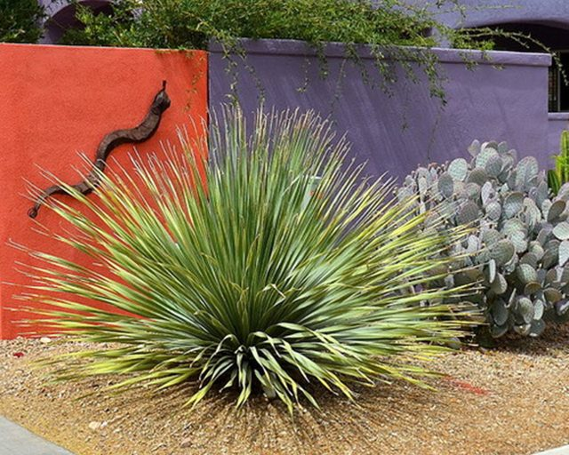 Outdoor-Color-3