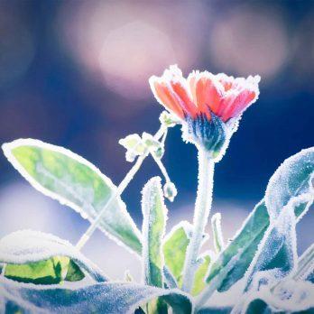 10 Clever Tricks That Will Help Your Garden Survive Winter