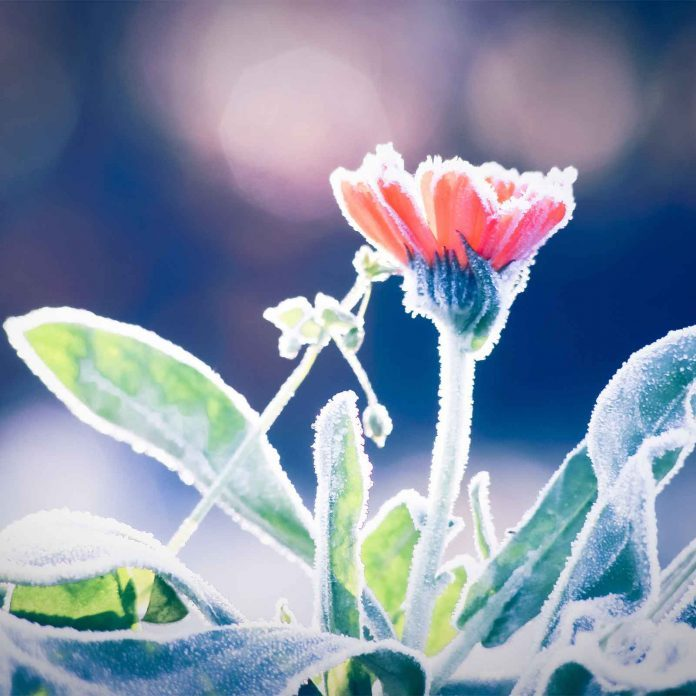 10 Clever Tricks That Will Help Your Garden Survive Winter