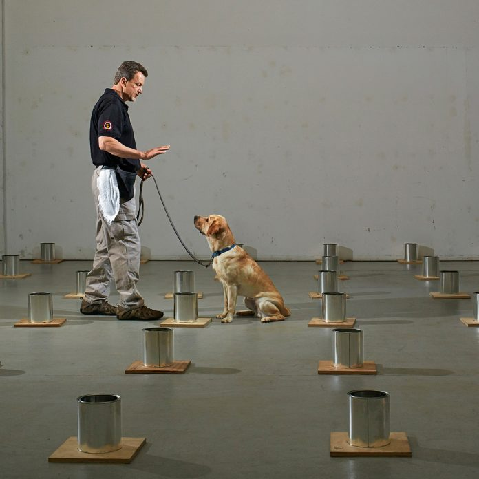 """Welcome to """"Bomb Dog U,"""" Where Pooches Are Trained to Thwart Terrorism"""