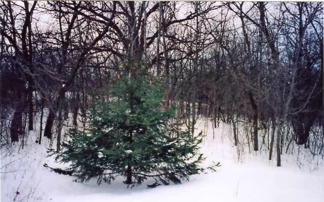 Country Magazine christmas tree