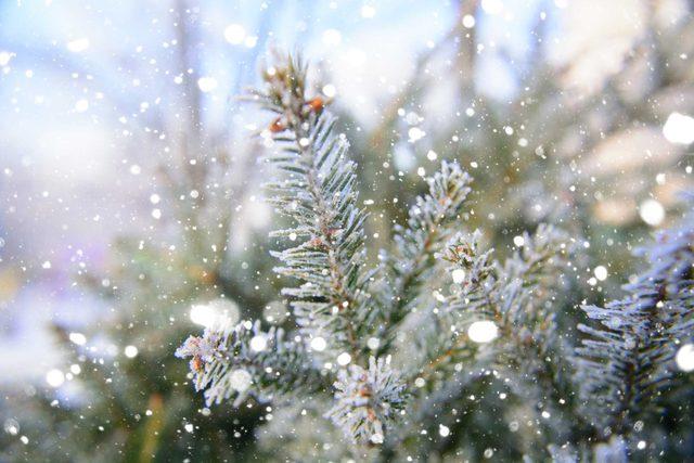 grandfather_christmas_tree_Svetlana-Cherruty