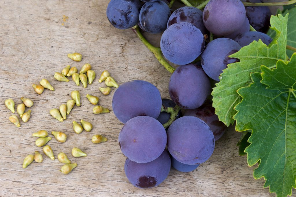 grape_seed_Dimijana