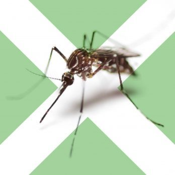 6 Surprising Dos and Don'ts of Mosquito Bites