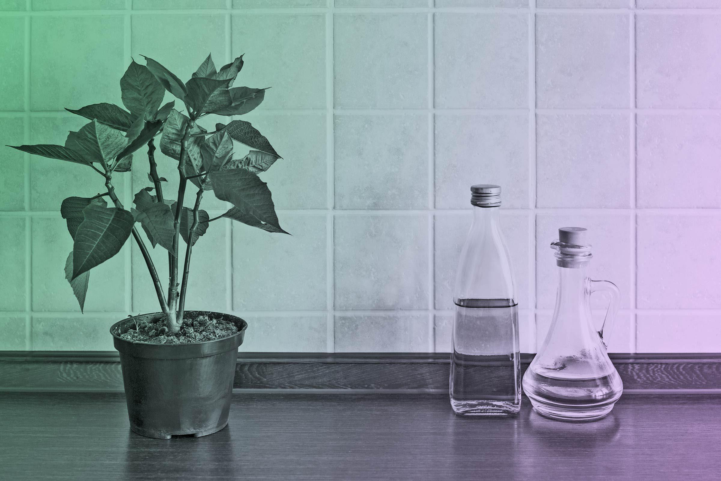 Kitchen Organization: Tips to Make Your Kitchen Less Messy | Reader