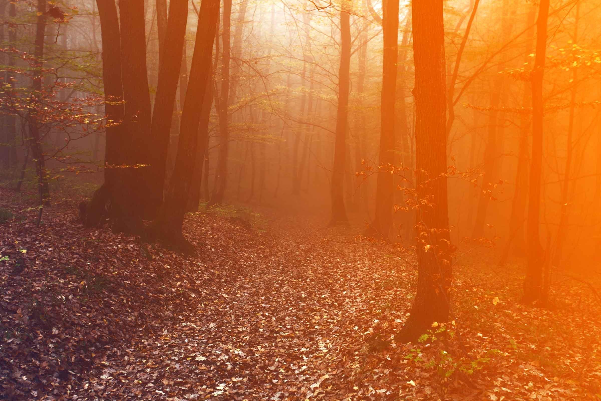 true halloween stories: creepy things that happened on halloween