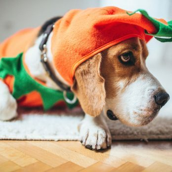 9 Precautions to Keep Your Dog Safe on Halloween