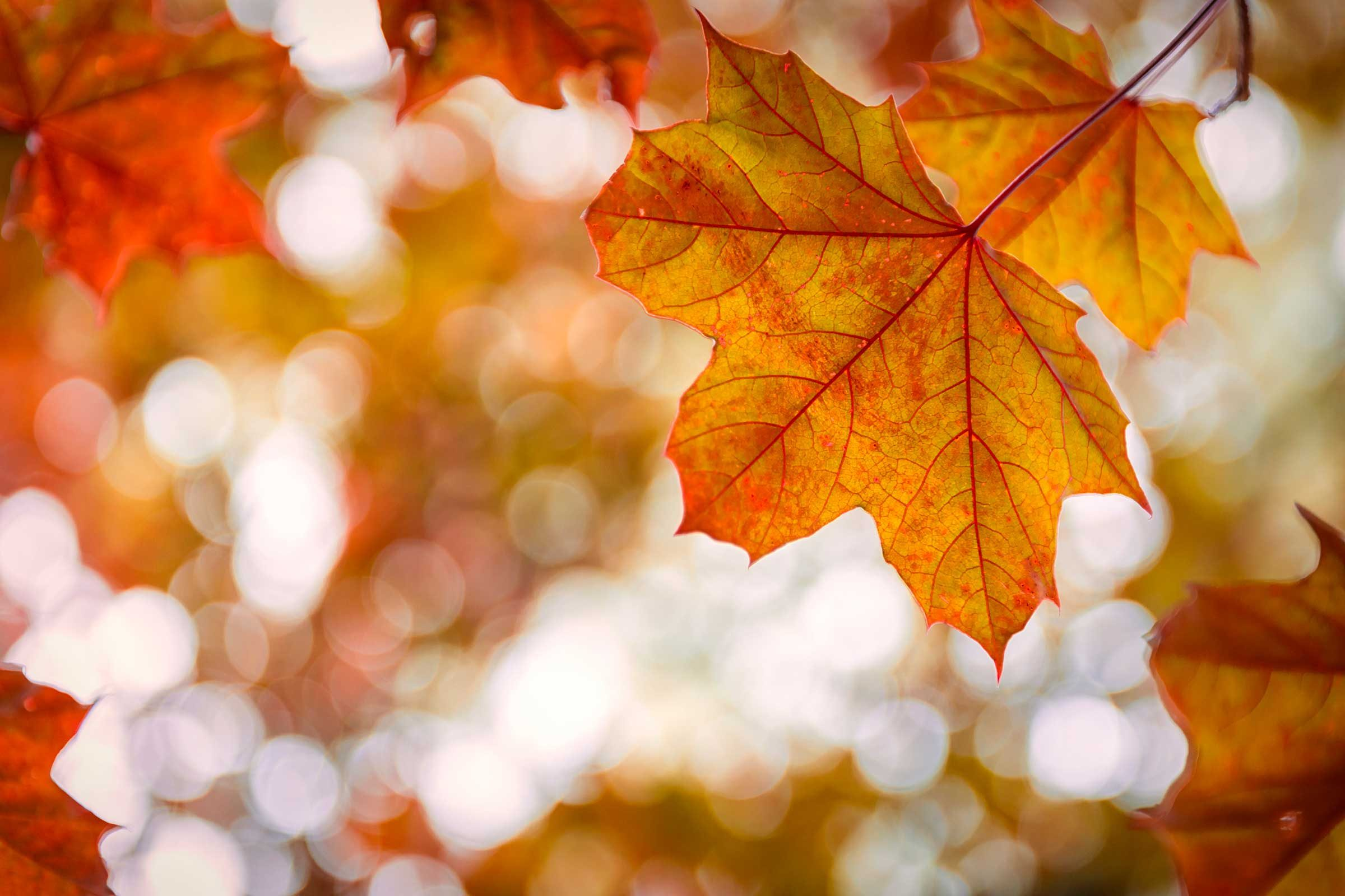 21 mindblowing facts about autumn readers digest