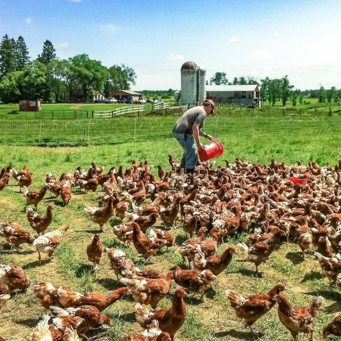 These Backyard Chicken Farmers Started With 5 Hens. Now They Sell 7,000 Cartons a Week.