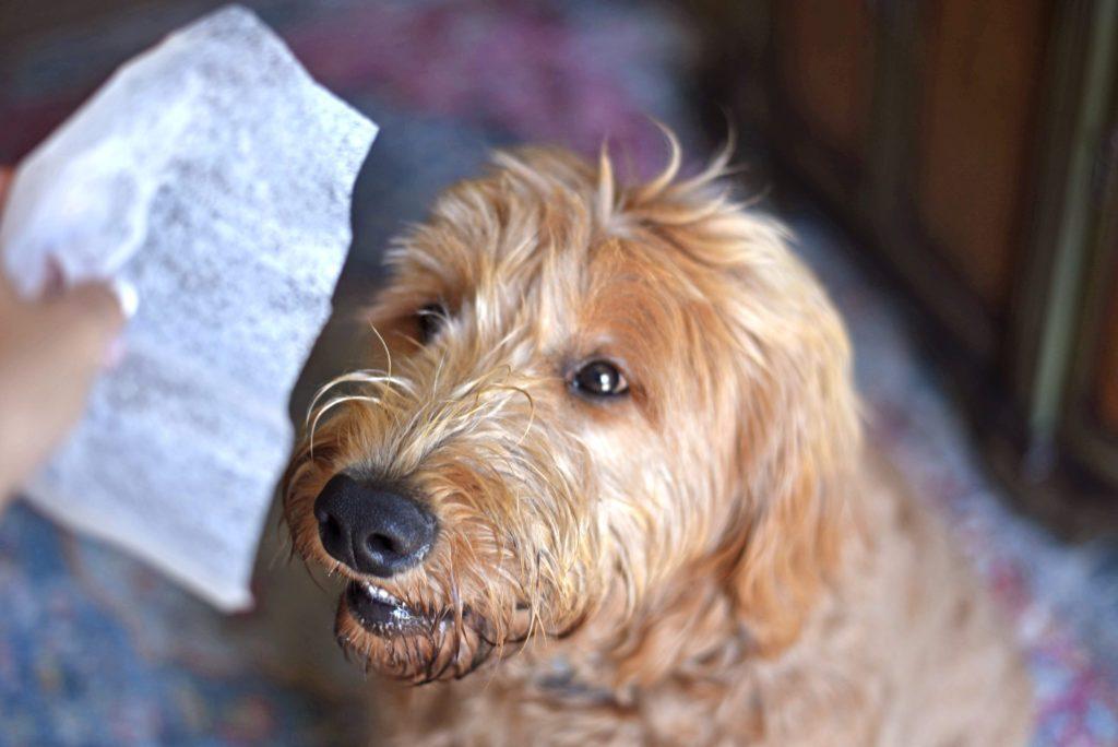 hand holding a dryer sheet near a dog