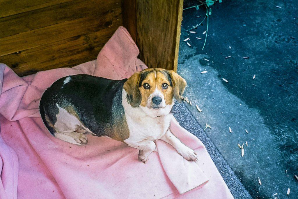 my-daughter-terrified-dogs-then-met-henry
