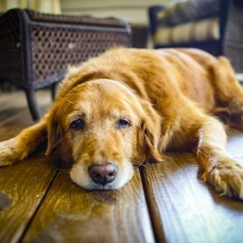 7 Tips for Emotionally Coping with the Loss of Your Dog