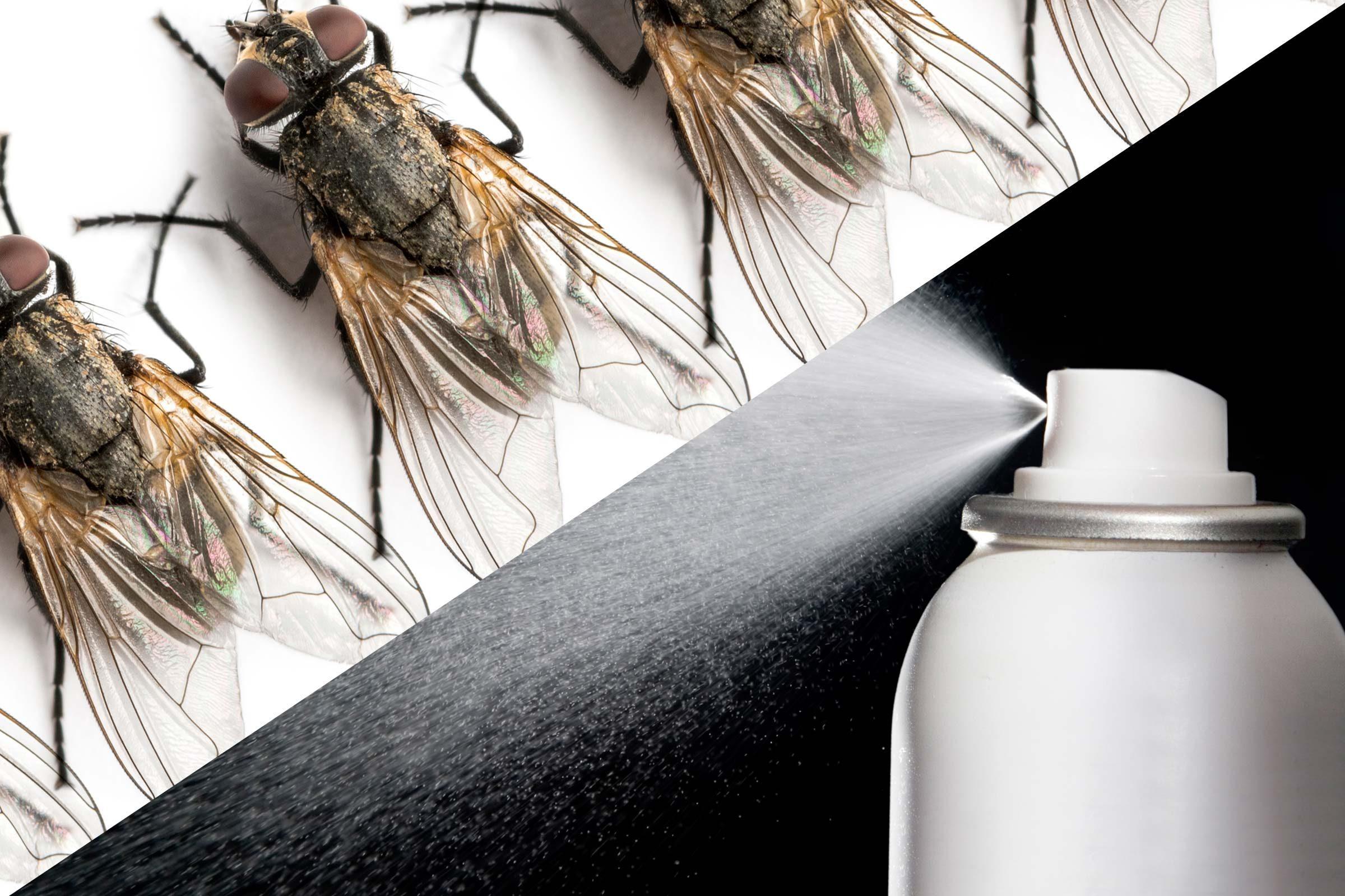 Hair Spray Uses Reader S Digest