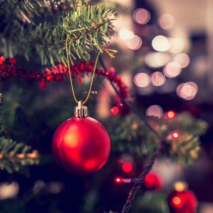 12 Secrets Your Christmas Tree Wishes You Knew