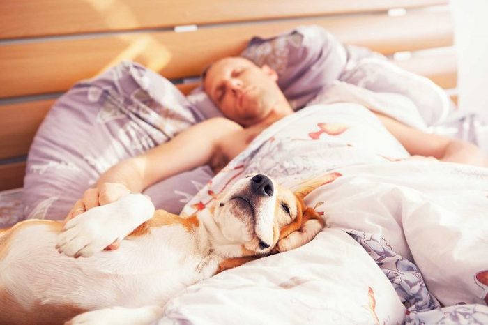 these_4_sure_signs_dog_trusts_you_sleep_room