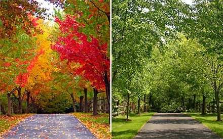 Watch the Seasons Change on One of the Nicest Hidden Streets in America