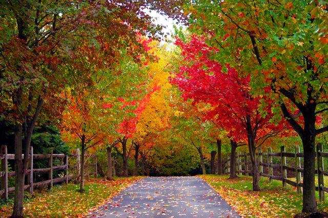 when-woman-stopped-admire-neighborhood-scenery-Fall