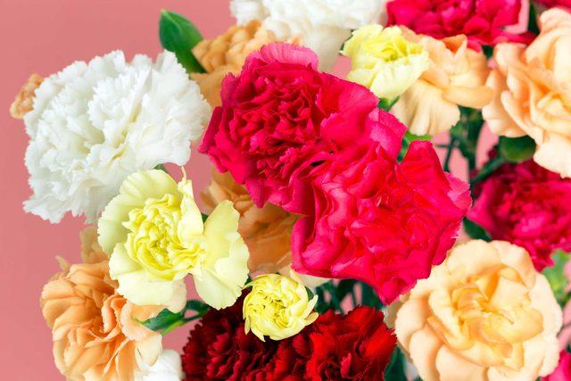 festive_flowers_buy_instead_poinsettias_christmas_carnations
