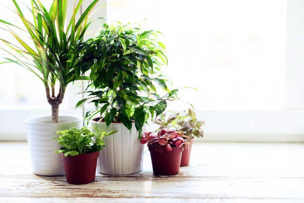 ways_house_might_making_sick_houseplants