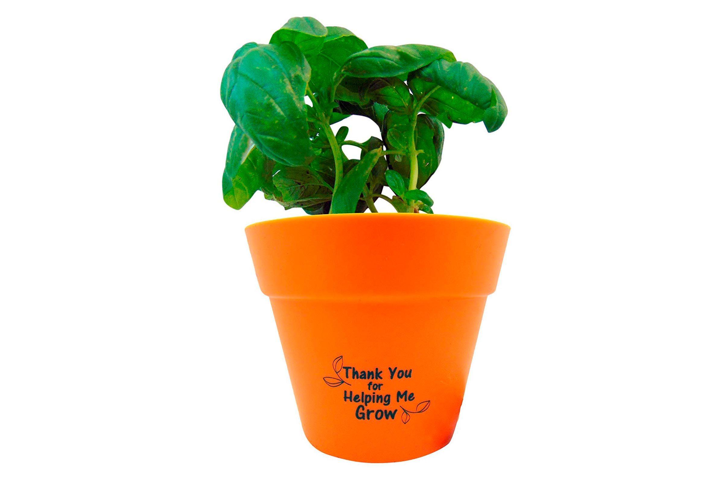 Basil plant pot set