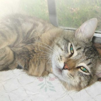 This Cat Broke Out of an Animal Shelter to Find His Rescuer