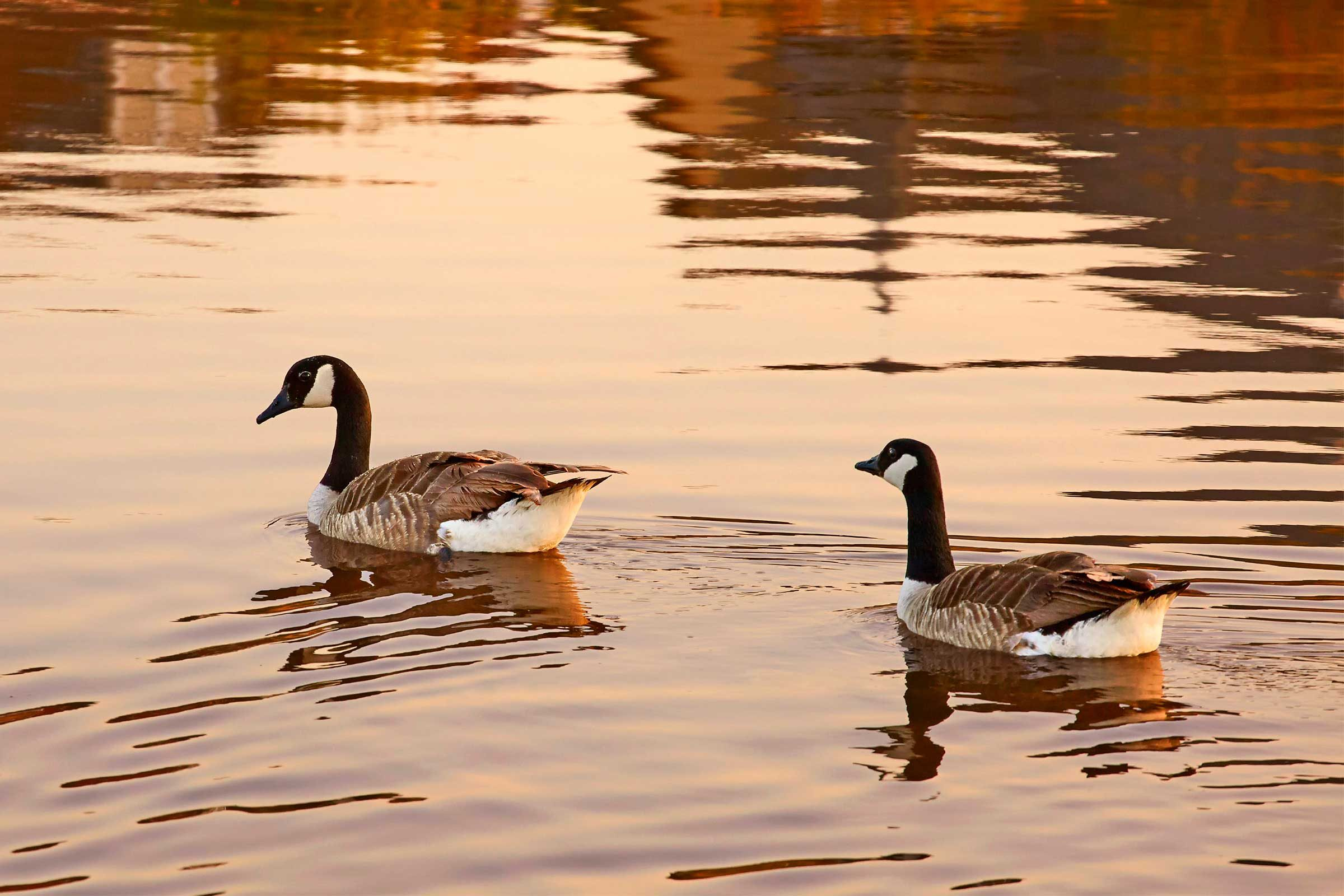 geese-teach-powerful-lesson-country-extra