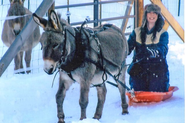 prepare-to-be-amazed-samson-is-the-smartest-donkey-2