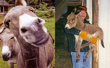 Prepared to Be Amazed: Sampson Is the Smartest Donkey You'll Ever See