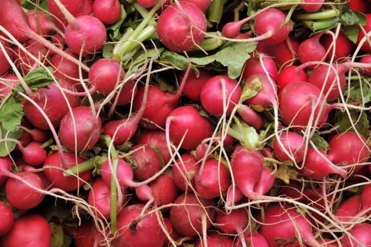 Close up on bunch of fresh radishes
