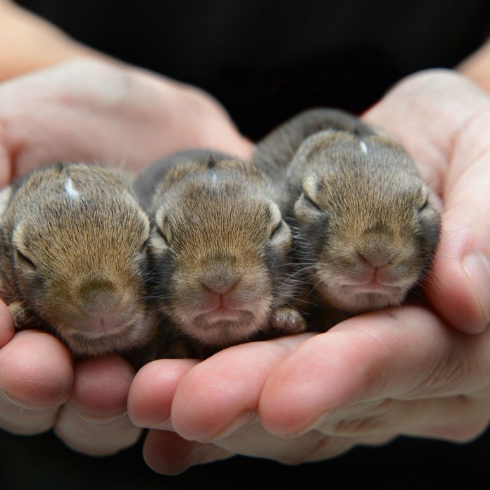 17 Adorable Pictures of Baby Animals You'll Love Instantly