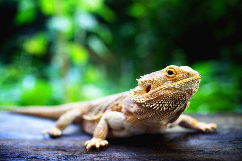 weird_things_didnt_know_could_be_allergic_to_reptiles