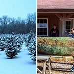 This Couple's Dream of Owning a Christmas Tree Farm Came True