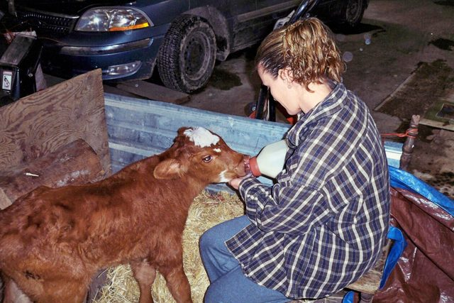 Delivering These Baby Calves is One of My Most Treasured Memories