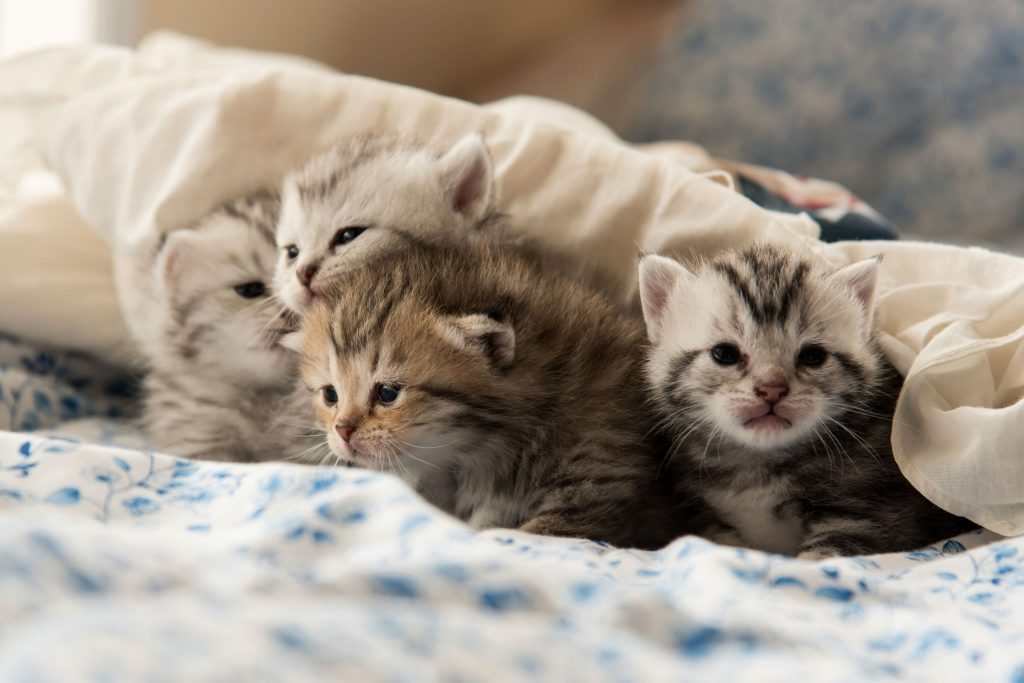 Things I've Learned Fostering Cats From The Humane Society