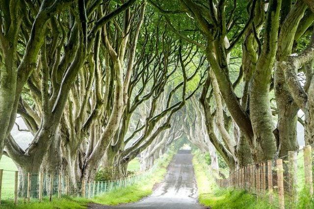 01-these-captivating-Images-of-Amazing-Trees