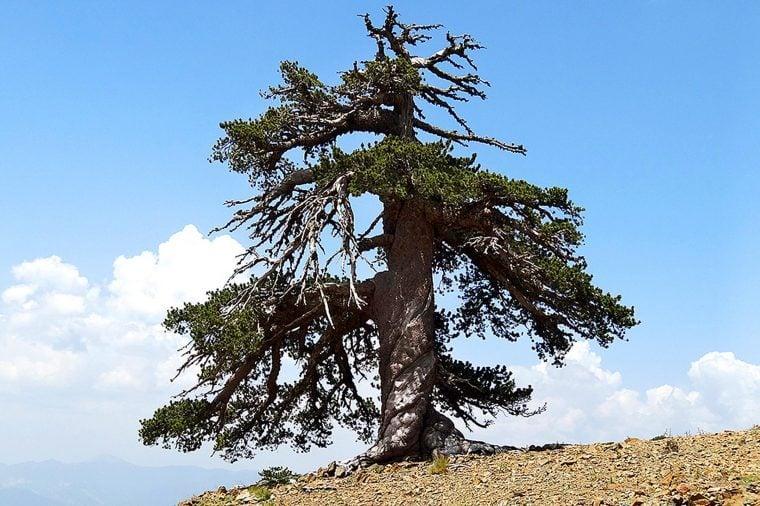 02-these-captivating-Images-of-Amazing-Trees