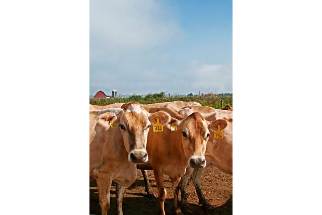 03-This-Fifth-Generation-Dairy-Farm-Built-Its-New-Business-Model-Around-Good-Old-Glass-Bottles