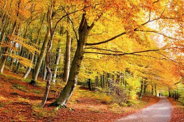 04-these-captivating-Images-of-Amazing-Trees