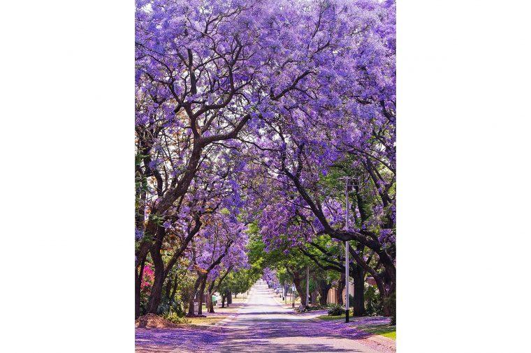 06-these-captivating-Images-of-Amazing-Trees