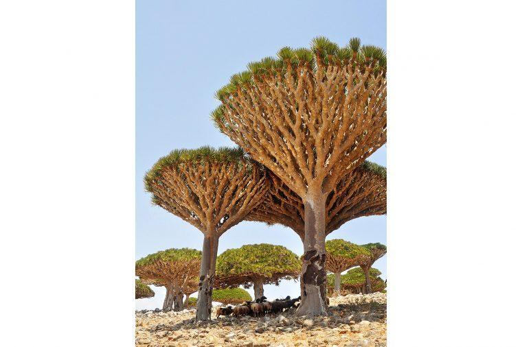 07-these-captivating-Images-of-Amazing-Trees