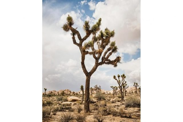 08-these-captivating-Images-of-Amazing-Trees